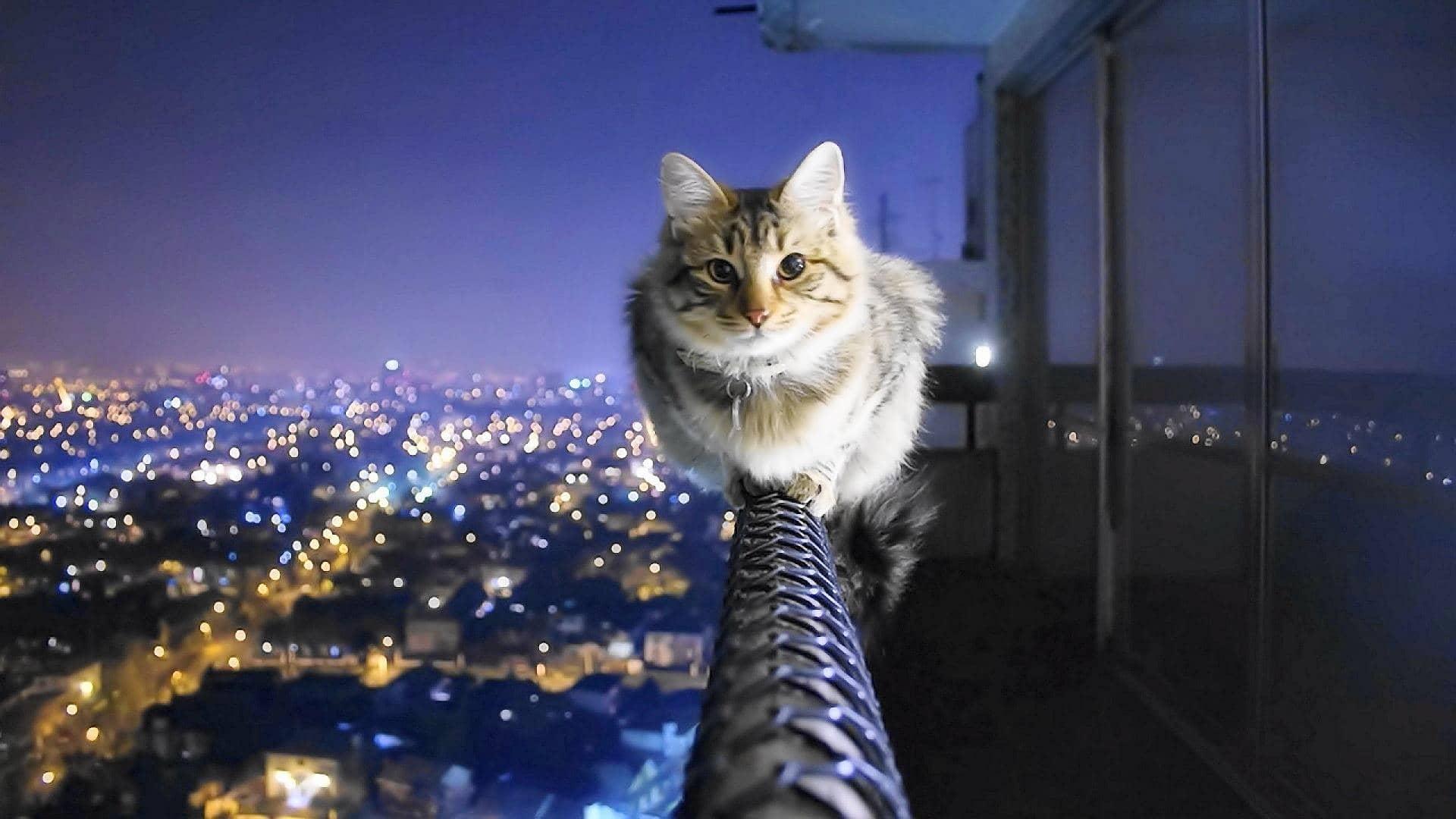 Controle de gatos, pragas, dedetização