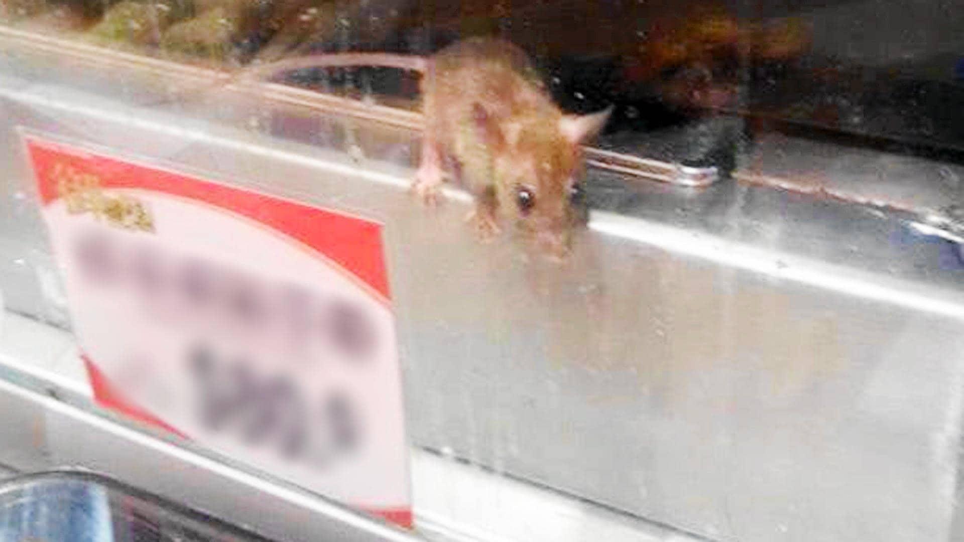 Controle de ratos em empresas e supermercados, controle de pragas, dedetização